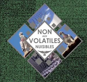 Volatile, Pigeon